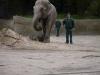 Taufe des Elefantenbabys ASSAM Hagenbecks Tierpark © ganz-hamburg.de