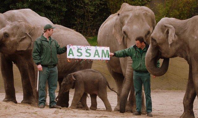 ASSAM das Elefantenkind bei Hagenbeck (c) ganz-hamburg.de