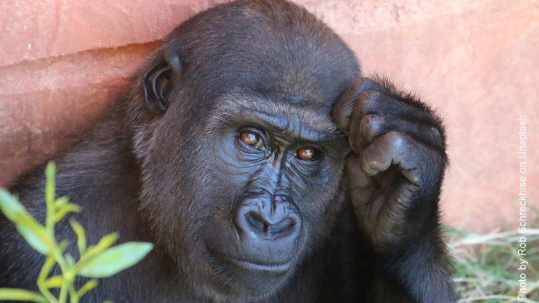 Ich hab da mal eine Frage - Affe