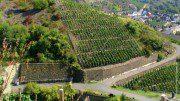 Ahrtal der Rotwein-Wanderweg