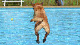 Hundeschwimmtag