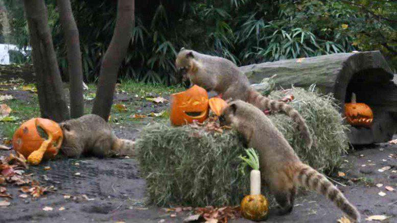 Hagenbecks Tierpark Halloween Frühstück