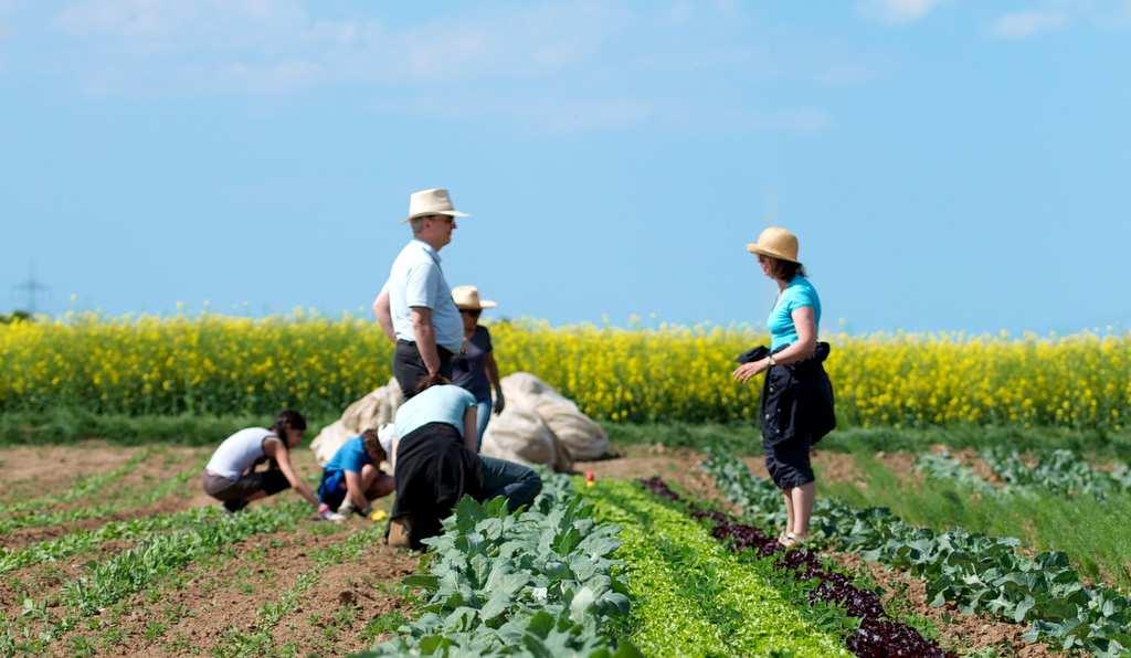 Im Gemüsegarten gärtnern