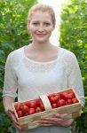 Tomaten pflücken