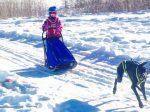 Hunde ziehen im Winter einen Schlitten