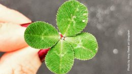 Hand mit grünem Kleeblatt