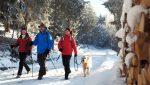 Winterwandern mit Hund