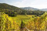 Mas Andes Weingut in Villavicencio