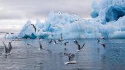 Antarktis mit Seevögln