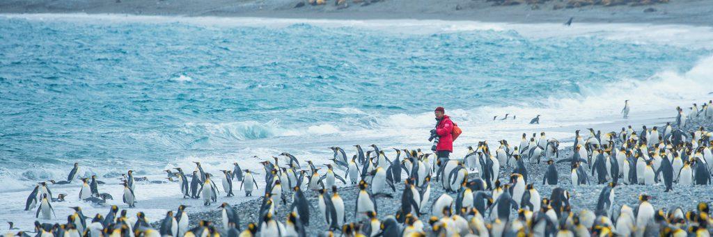 Antarktis mit Pinguien