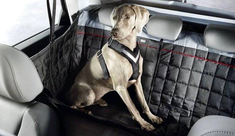 Audi Hundedecke