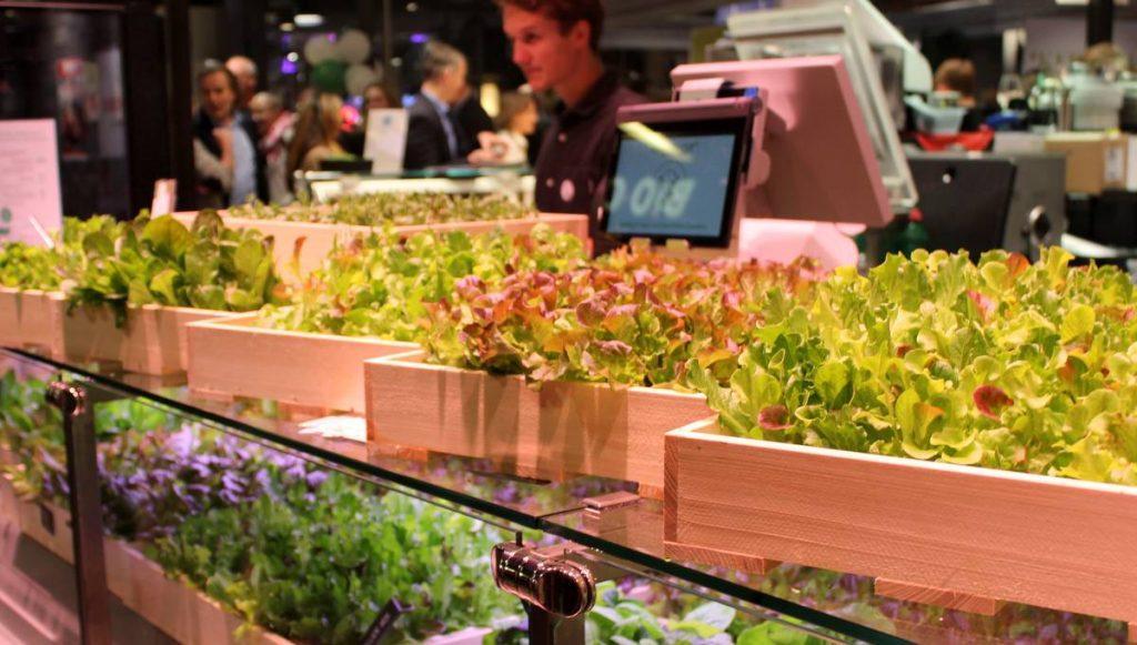 Bio Farming aus Hamburg