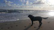 Hund in Kühlungsborn am Strand