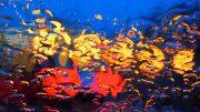 Kunstfoto - Piranhas