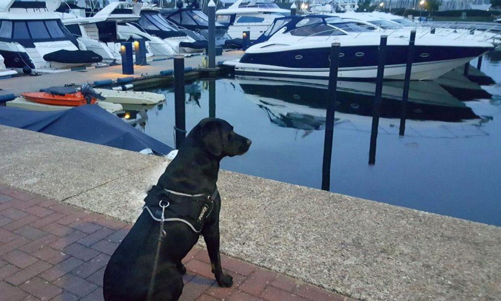 Der Hund Rascal schaut auf die Marina