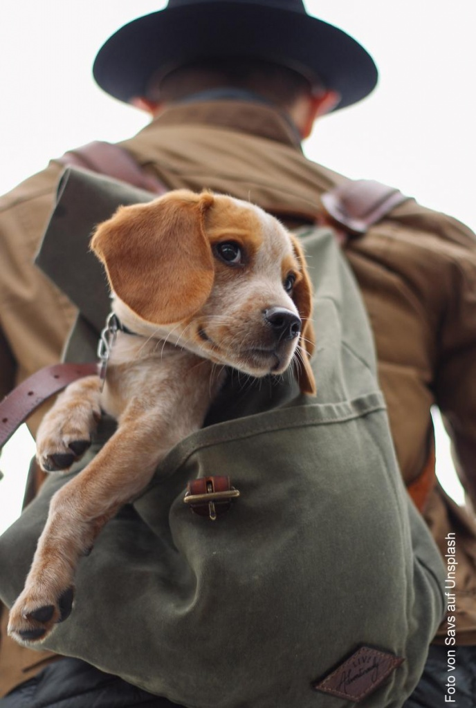 Ein Hund wird im Rucksack getragen