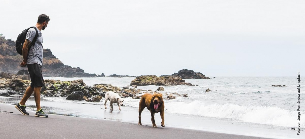 Zwei HUnde mit Mann mit Rucksack am Strand