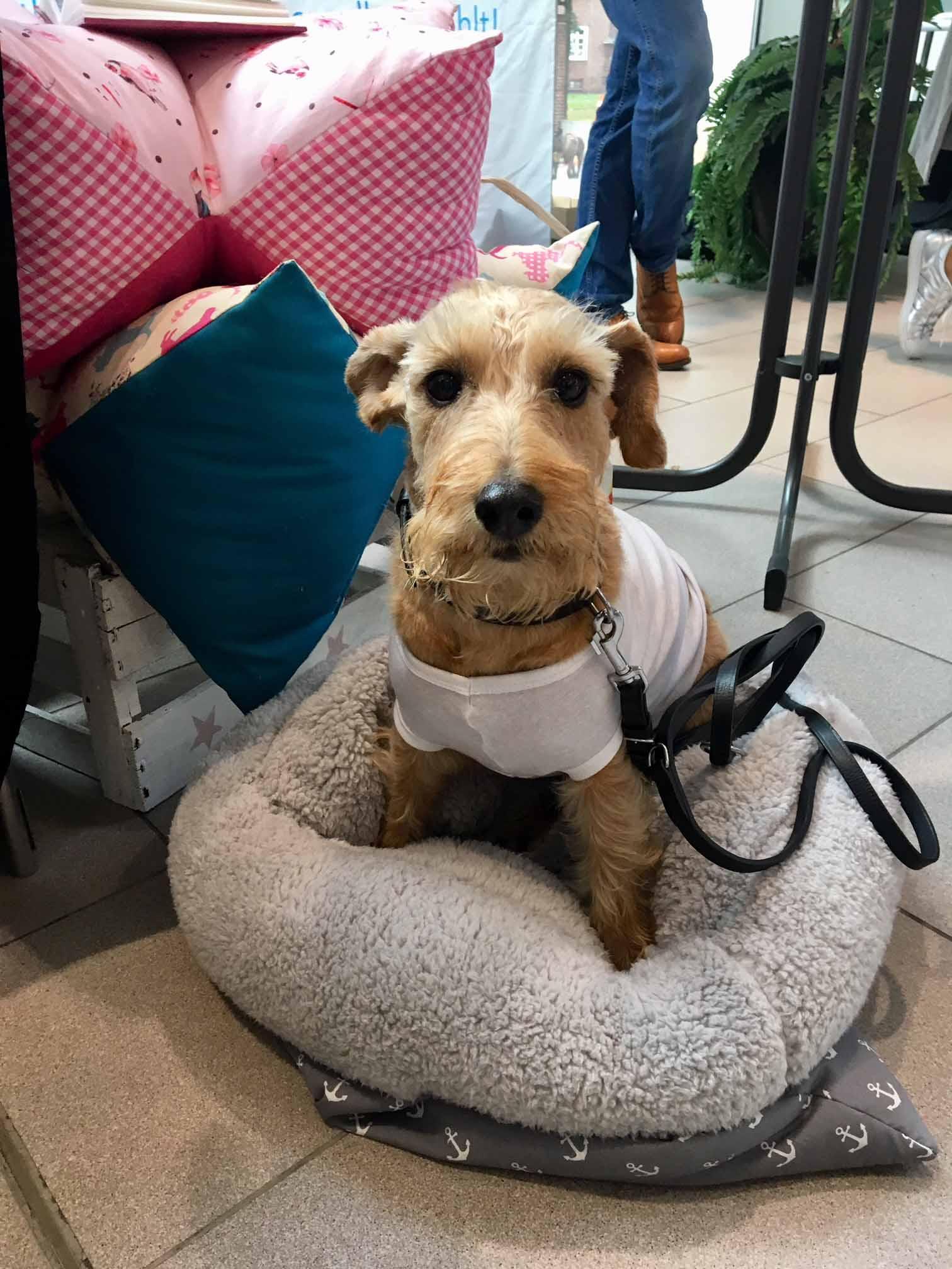 Hund Yema auf der Hamburger Hundemesse