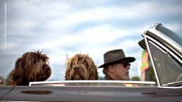 Zwei Hunde und ein Fahrer mit Hut im Auto - Hunde