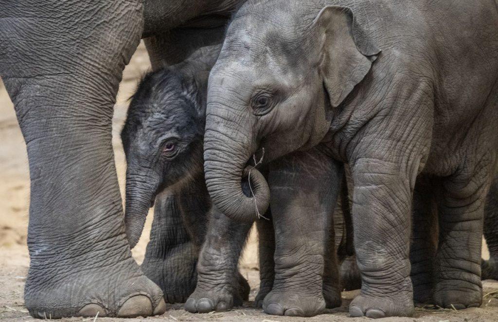 Zwei Elefantenkinder spielen