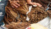 Tabakblätter