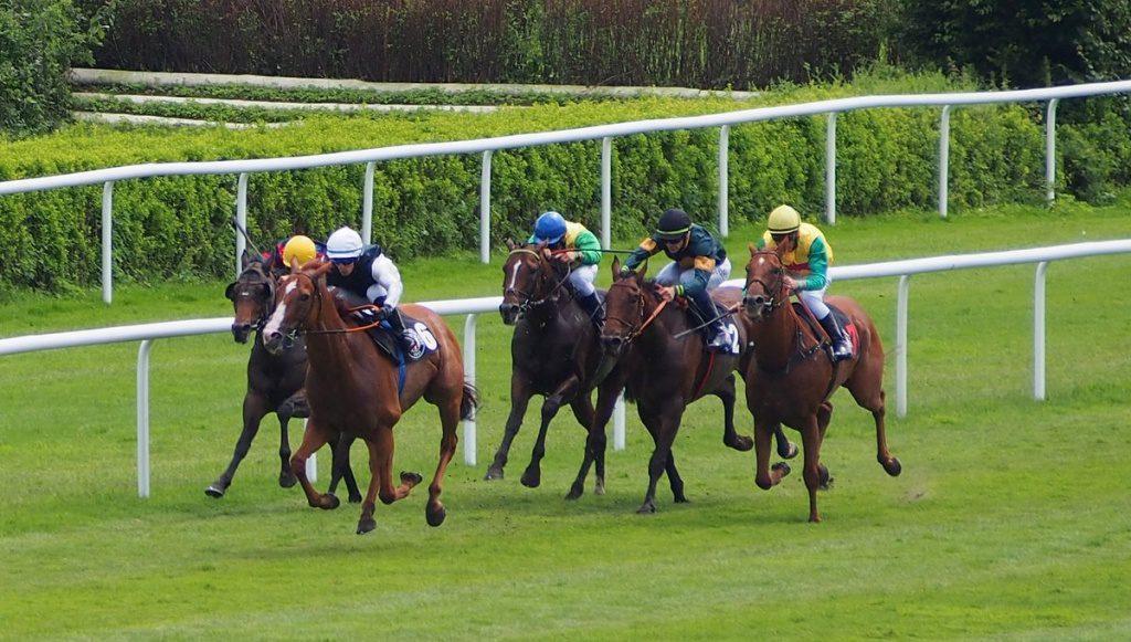 Pferde auf der Rennbahn in Hamburg Horn