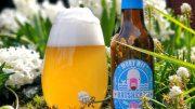 Ratsherrn Moby Wit Bier im Glas im Gras
