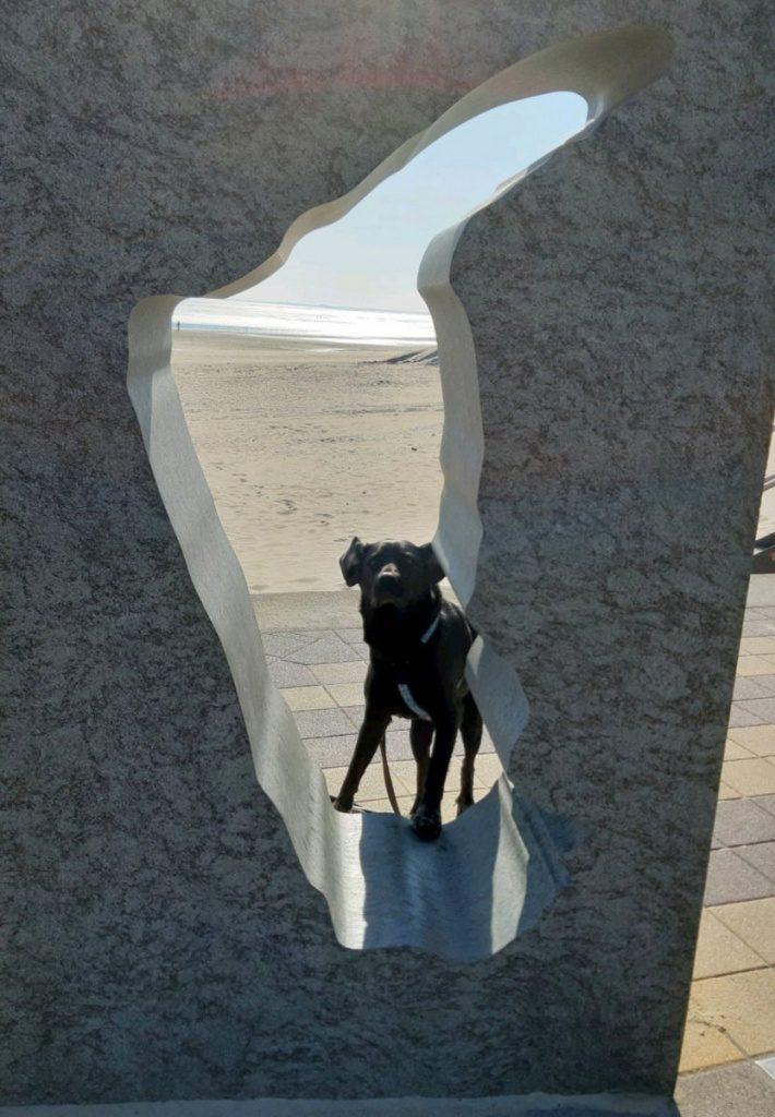 Hund auf Föhr