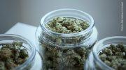 Cannabisblüten im Glas