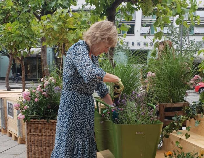 Frau pflanzt Lavendel