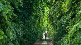 Baumschul Garten