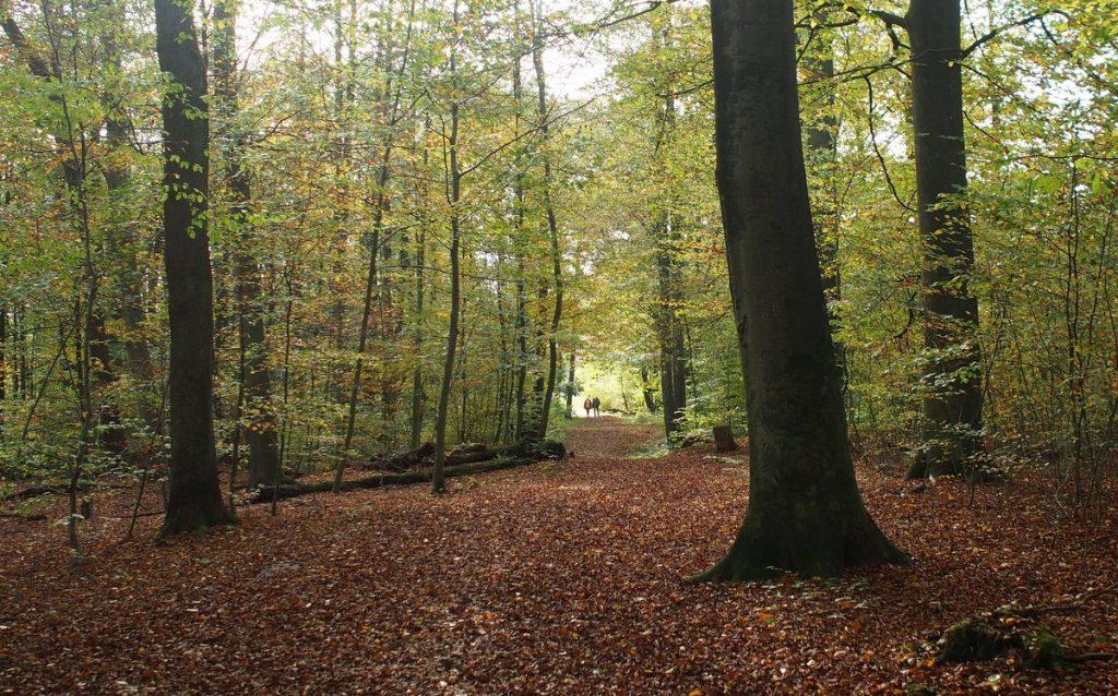 Blick in ein Waldstück in Hamburg Ohlstedt