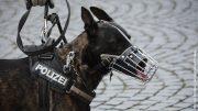 Polizeihund mit Maulkorb