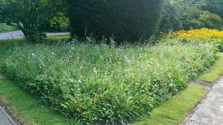 Blumen- und Bienenwiese auf dem Hauptfriedhof Hamburg Ohlsdorf