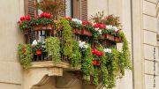 Altbauhaus Balkon mit sehr vielen Blumen