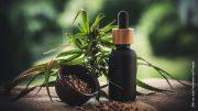 Cannabispflanze mit CBD-Öl in Flasche und CDB-Kapseln