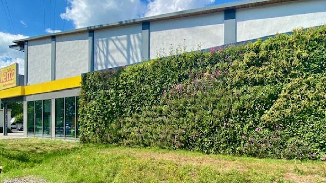 Die Netto Filiale Steilshoop hat eine grüne Living Wall bekommen