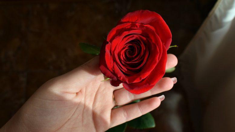 Frau hält eine rote Rose