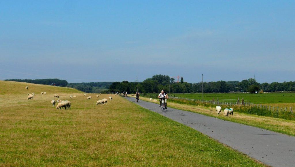 Immer die Elbe entlang der Wander- und Radweg in der Wedeler Marsch mit Fahrradfahrern