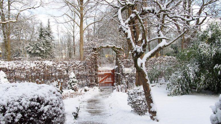 Winter mit Schnee in einem Hamburger Vorgarten