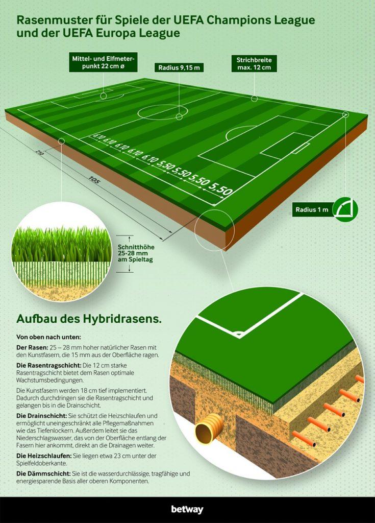 Grafik Aufbau von Hybridrasen