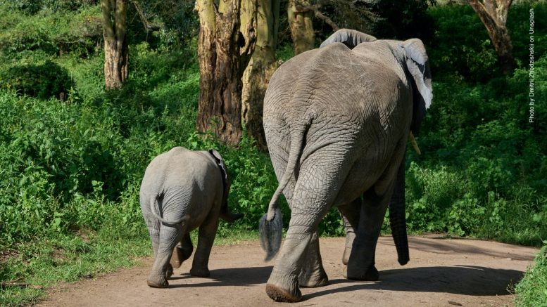 Elefanten Kuh mit Junges