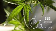 Cannabis Blätter und Formel