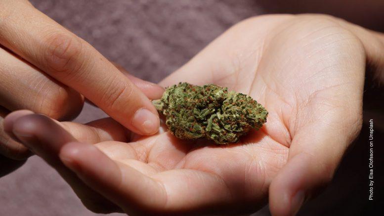 CBD Gras in einer Hand