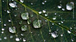 Grünes Blatt mit Wassertropfen Makroaufnahme