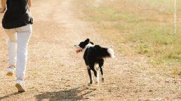Frau in weißer Hose joggt mit Hunde