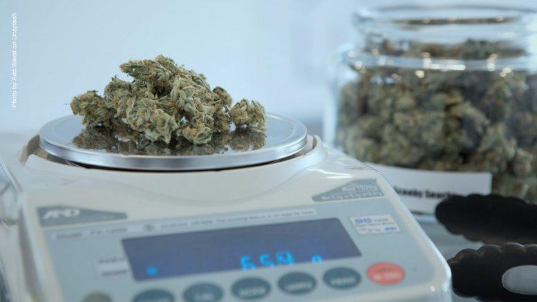 Cannabis wird abgewogen
