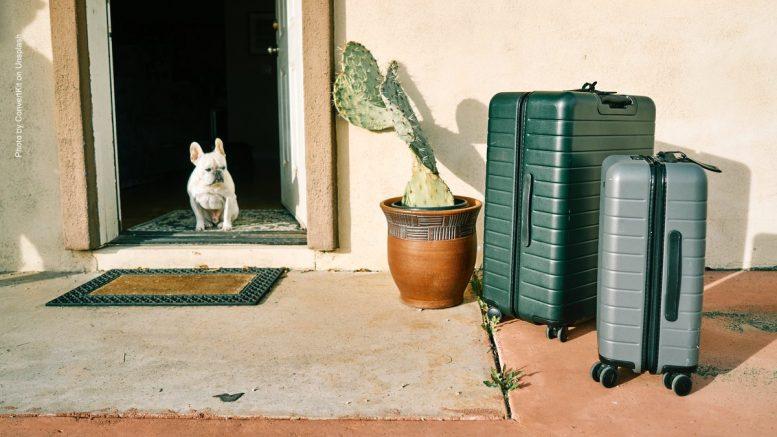 Zwei Rollkoffer und ein weißer kleiner Hund in der Haustür